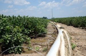 C Spire Helping Mississippi Delta Farmers Introduce Smart Agriculture Solutions